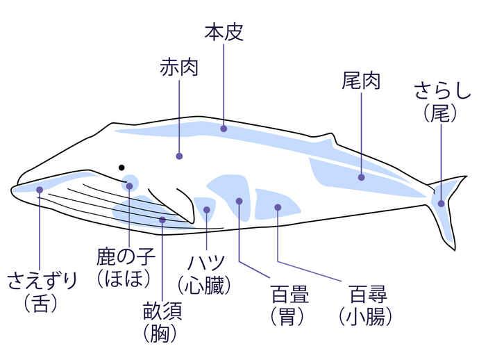 クジラの部位
