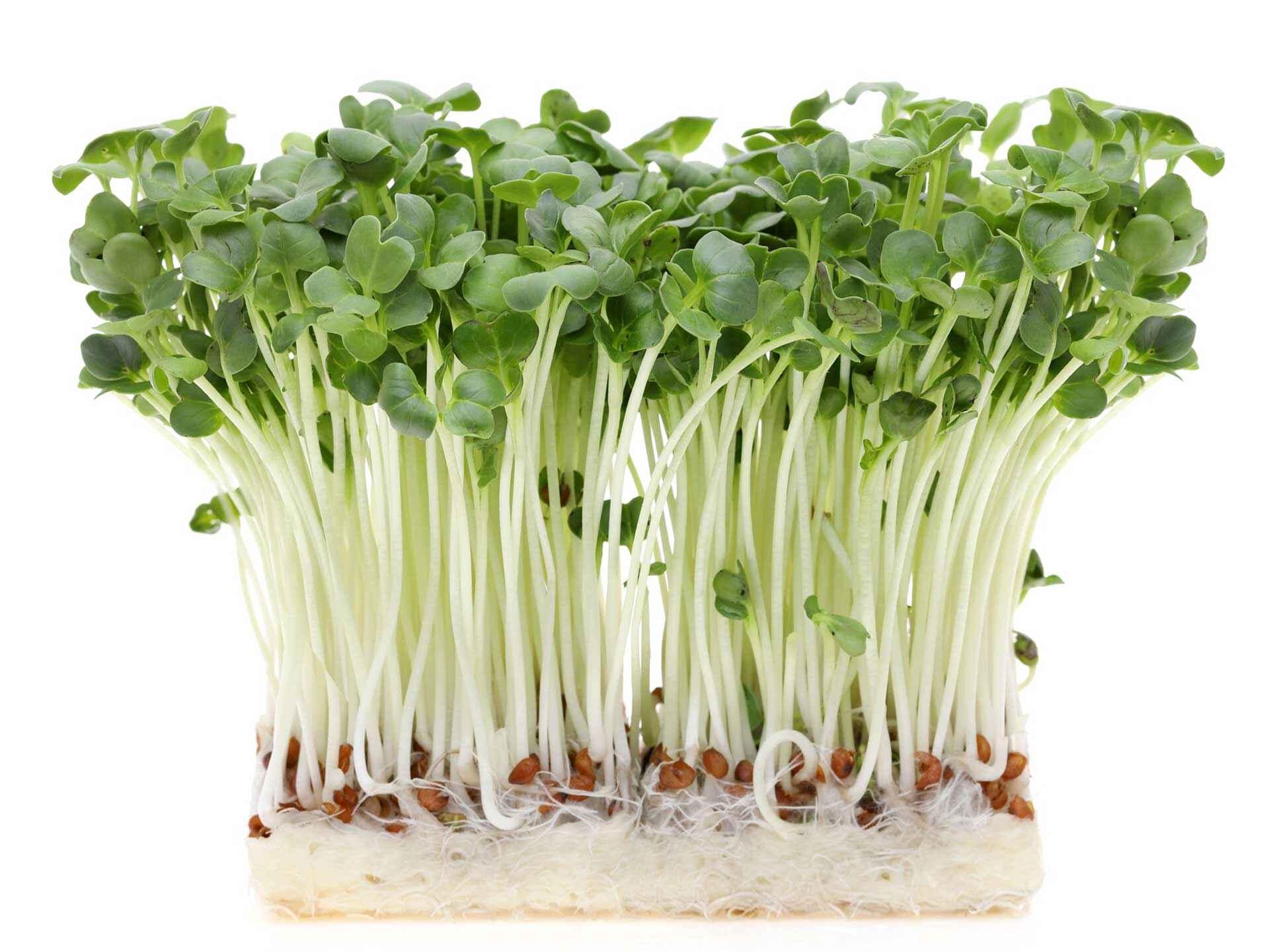 成長するための栄養素が凝縮、ファイトケミカルも豊富 ...