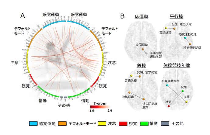 A=真ん中のオレンジの線で表されるように、体操選手は一般人よりも脳領域間の神経接続が強くなっていた。B=体操選手は、床運動、平行棒、鉄棒のDスコアで有意な正の相関が見られた(順天堂大学リリースより)